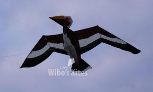 Go Fly a Kite - Percy the Pelican