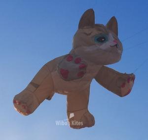 Tabby Kitten gray